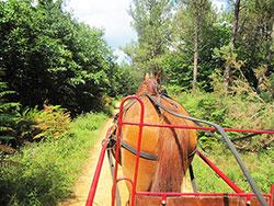 Attelage sur les pistes forestières